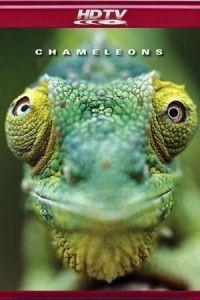 Хамелеоны мира / Chameleons of the world (2011)