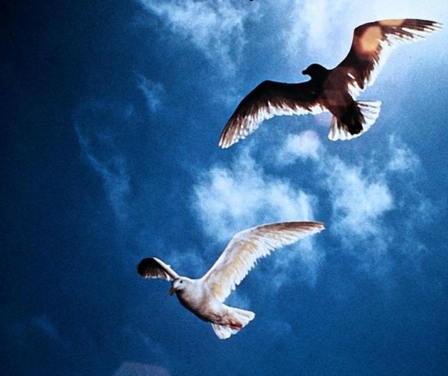 jonathan livingston seagull essay As you all know seagulls live for the food, for just getting the food from the sea well jonathan livingston seagull is one of them but he discovers that there is more to a seagull to do in life.