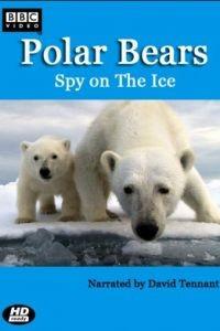 BBC. Белый медведь: Шпион во льдах