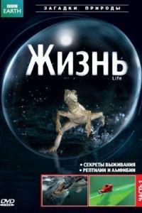BBC: Жизнь 1 сезон 10 серия