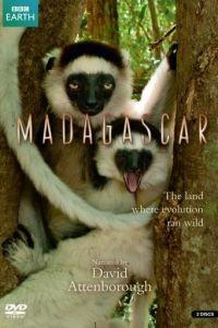 BBC: Мадагаскар 1 сезон 5 серия