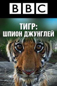 BBC: Тигр – Шпион джунглей 1 сезон 3 серия