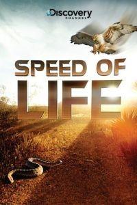 Discovery: Скорость жизни 1 сезон 3 серия