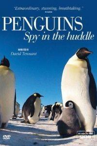 BBC. Пингвины: Шпион в толпе 1 сезон 3 серия