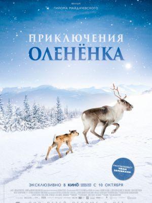 Cмотреть Приключения олененка / A?lo: Une odyss?e en Laponie (2018) онлайн на Хдрезка качестве 720p