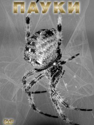 Смотреть Пауки / Spiders (2000) на шдрезка