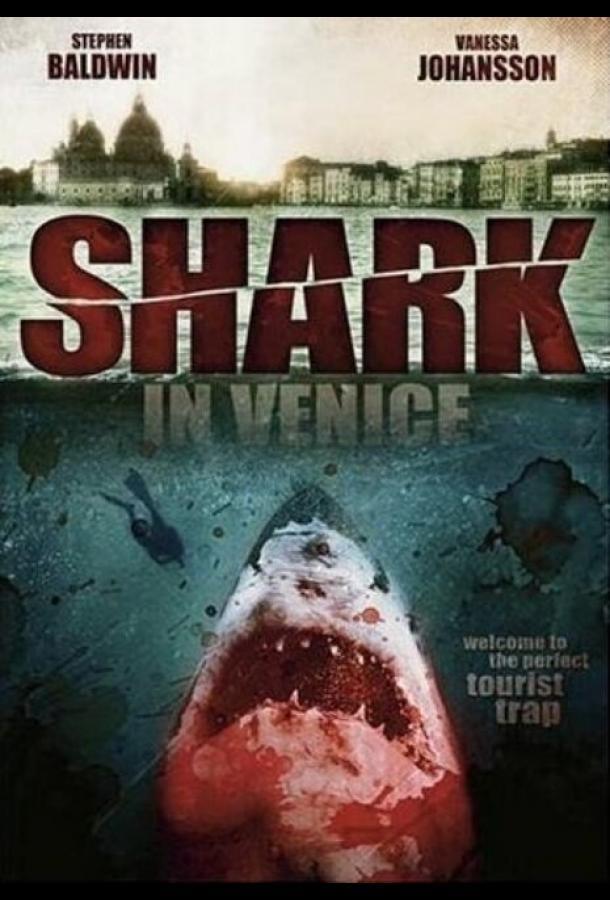 Акула в Венеции