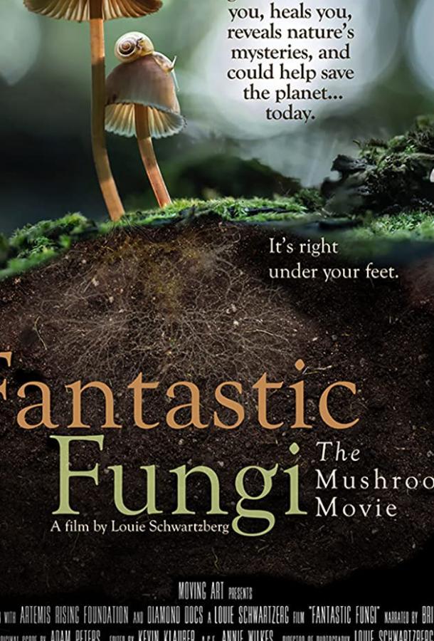 Фантастические грибы