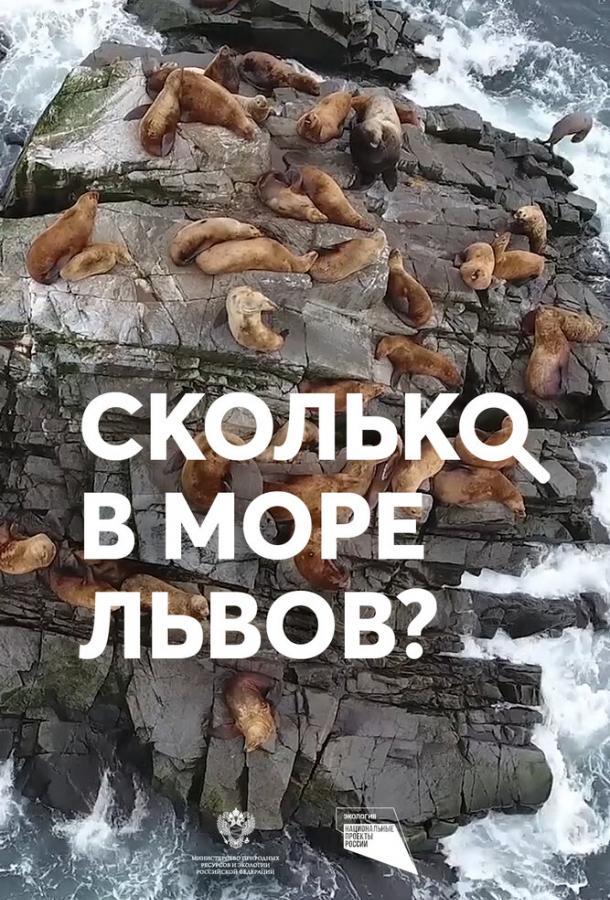 Сколько в море львов?