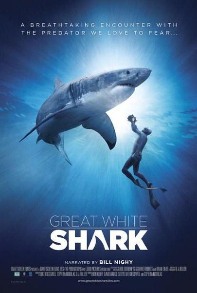 Самая большая в мире белая акула?