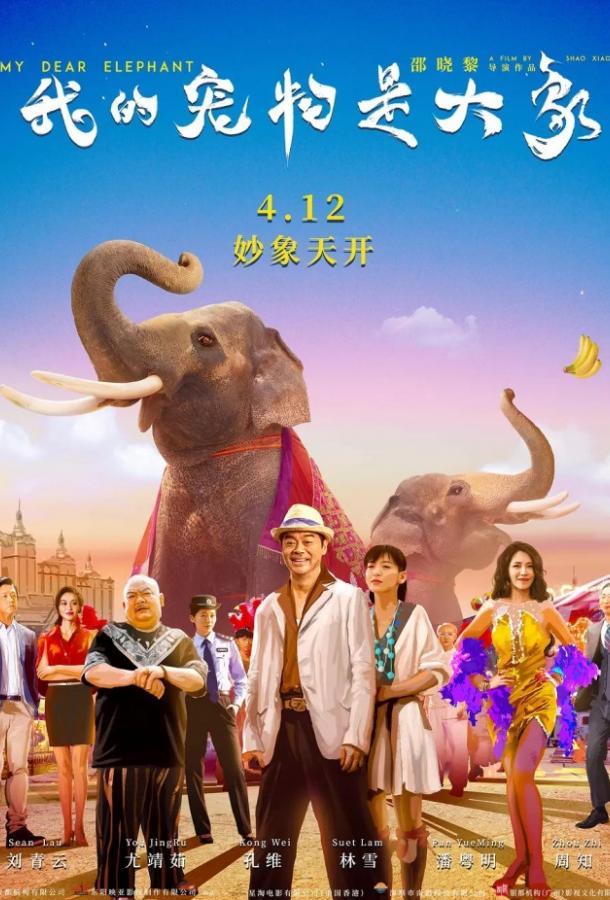 Дорогие мои слоны