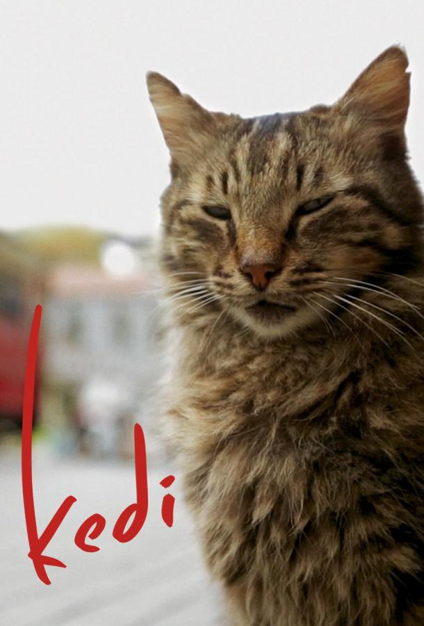 Город кошек / Кот