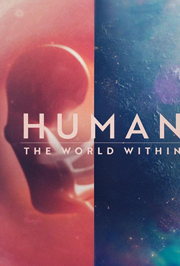 Человеческое тело: мир внутри 1 сезон 6 серия