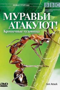 BBC: Муравьи атакуют / Ant Attack (2006)
