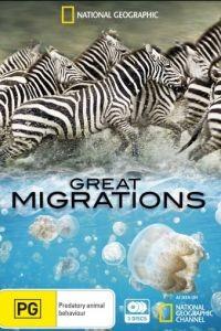 National Geographic. Великие миграции