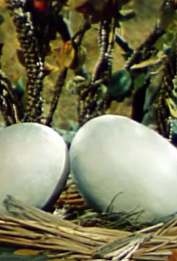 Два справедливых цыпленка (ТВ)